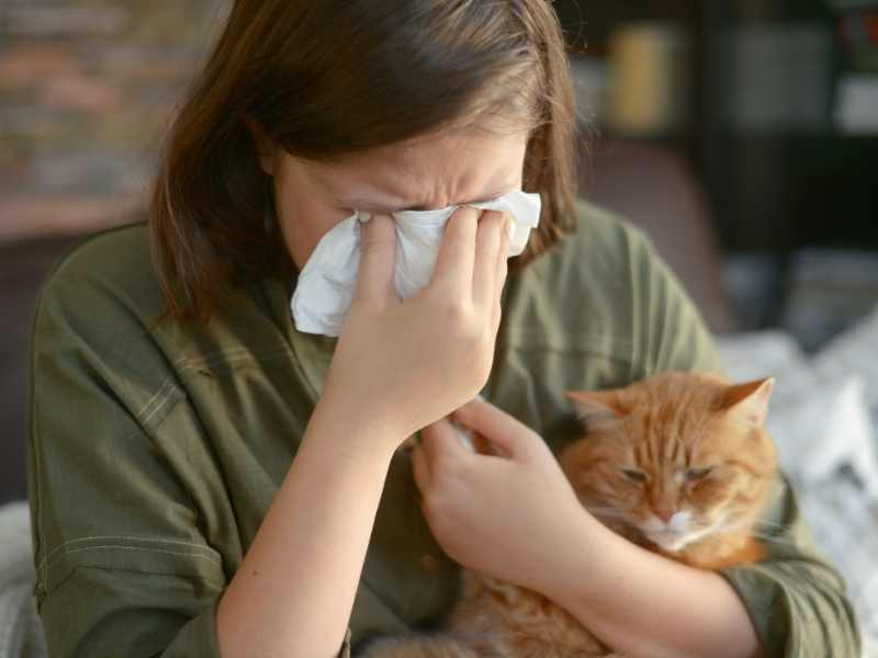 How to get rid of cat allergies – Air Purifiers!