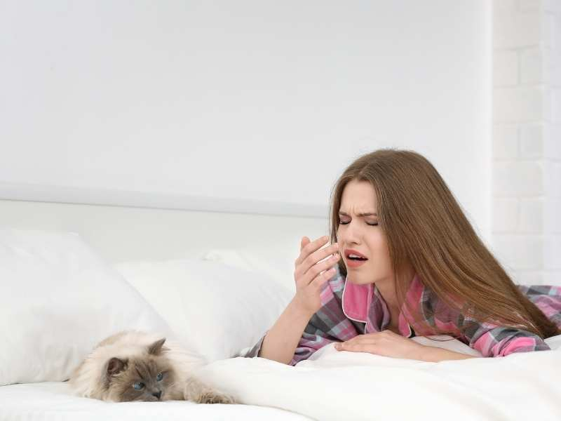 Are Air Purifiers Worth It? How to use air purifiers for cat allergies!