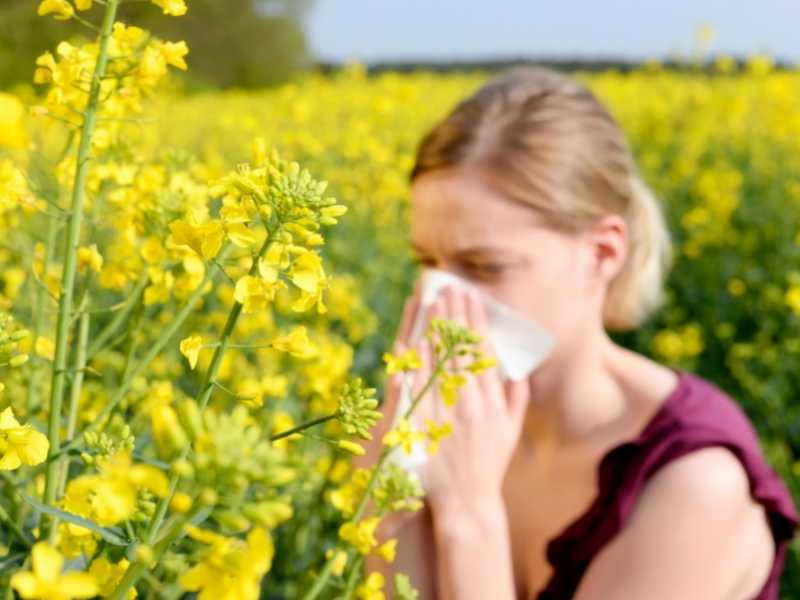 Why did I develop hay fever?